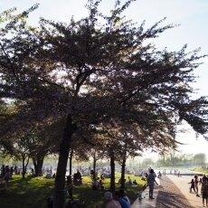 Westerpark 09
