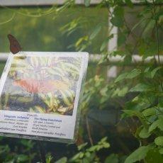 Hortus Botanicus 09