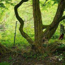 Hortus Botanicus 11