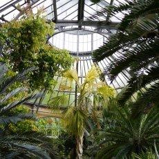 Hortus Botanicus 12