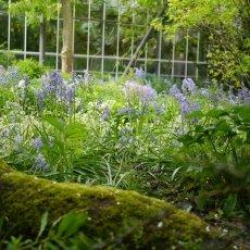Hortus Botanicus 15