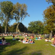 Sunbathing in Vondelpark