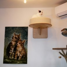 Kattencafé Kopjes 12