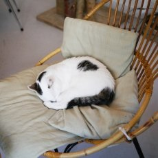 Kattencafé Kopjes 13