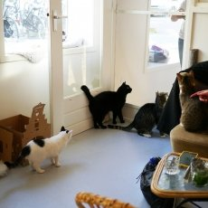 Kattencafé Kopjes 19