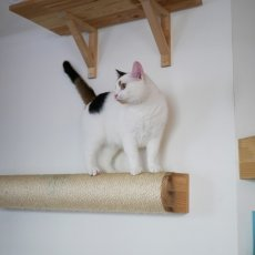 Kattencafé Kopjes 20