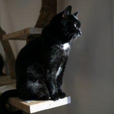 Kattencafé Kopjes 01