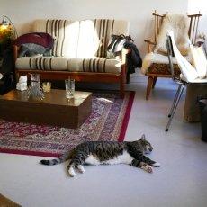 Kattencafé Kopjes 02