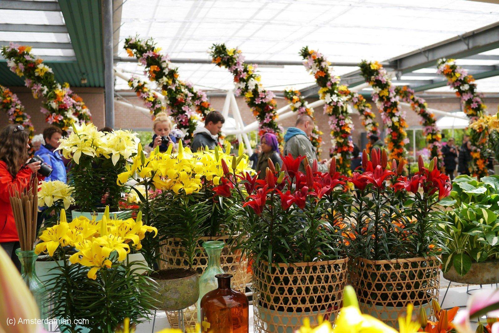Dreaming of Spring: Keukenhof Gardens | Amsterdamian