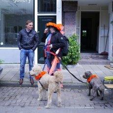 Dogs are orange too