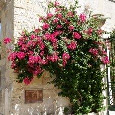 Lecce 19