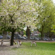 The deer in the park
