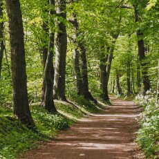 Forests in the Netherlands 01