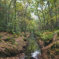 Forests in the Netherlands 23