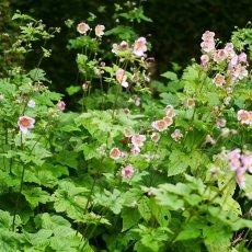 Merkelbach garden 05