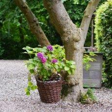 Merkelbach garden 06