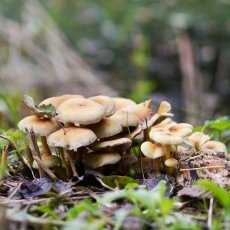 Mushrooms Westerpark 04