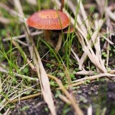 Mushrooms Westerpark 10
