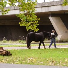 Casually walking the horse in the park
