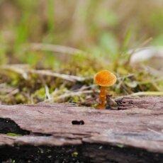 Mushrooms Westerpark 18