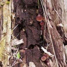 Mushrooms Westerpark 21