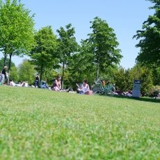 Sunbathing in the Westerpark