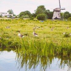 Oudorperpolder Alkmaar 23