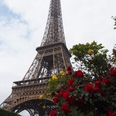 Paris in May - the Eiffel Tower and roses