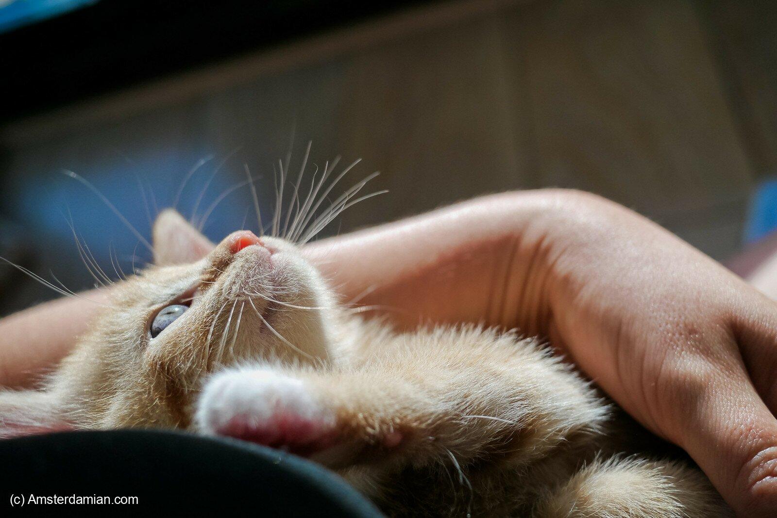 Pet photography 10