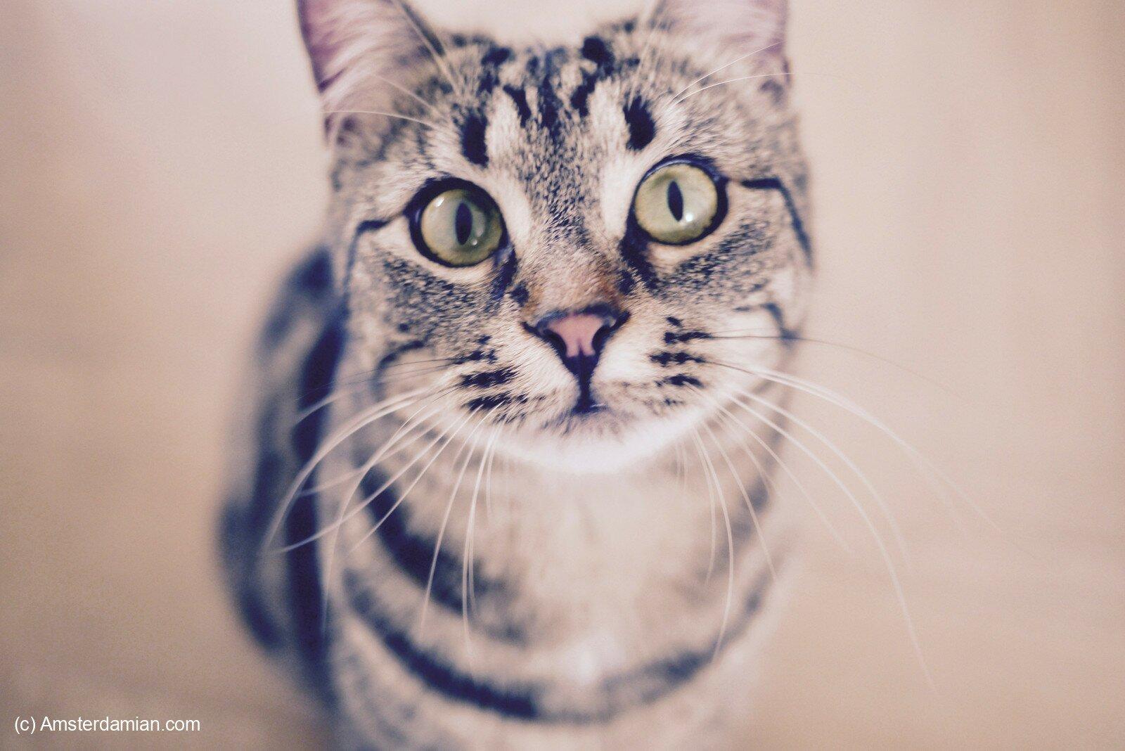 Pet photography 09