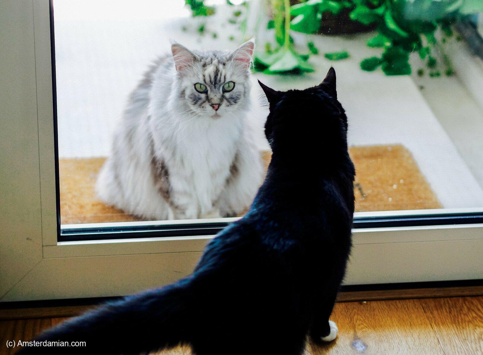 Pet photography 11