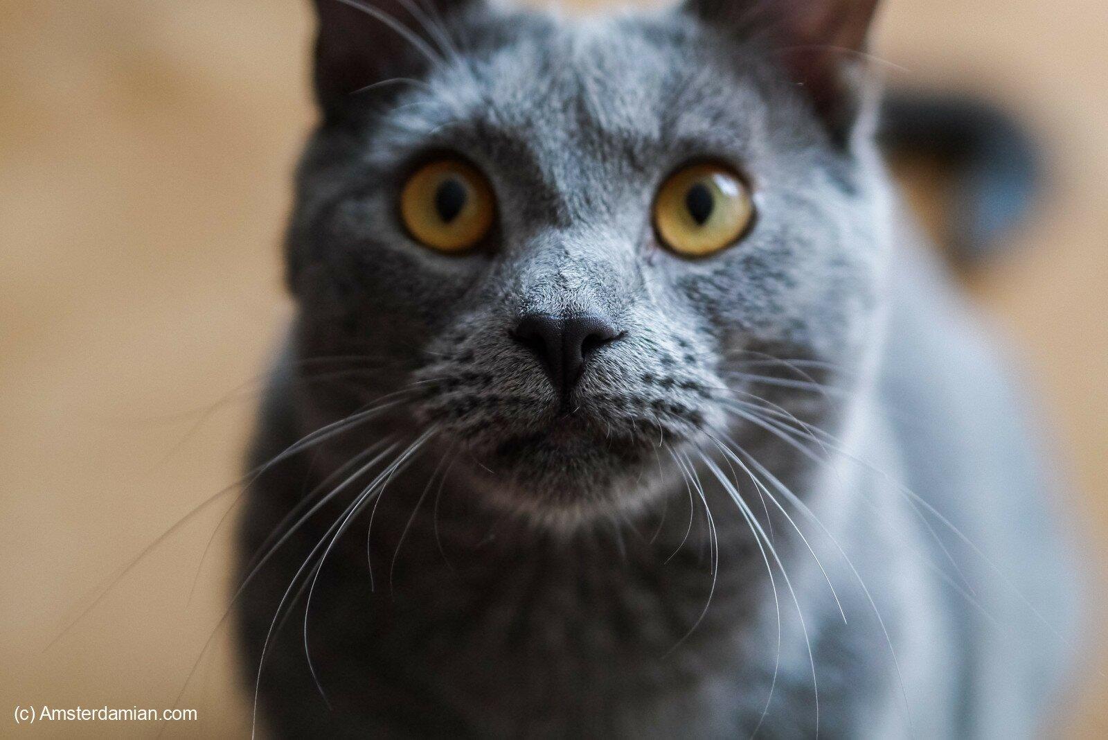 Pet photography 21