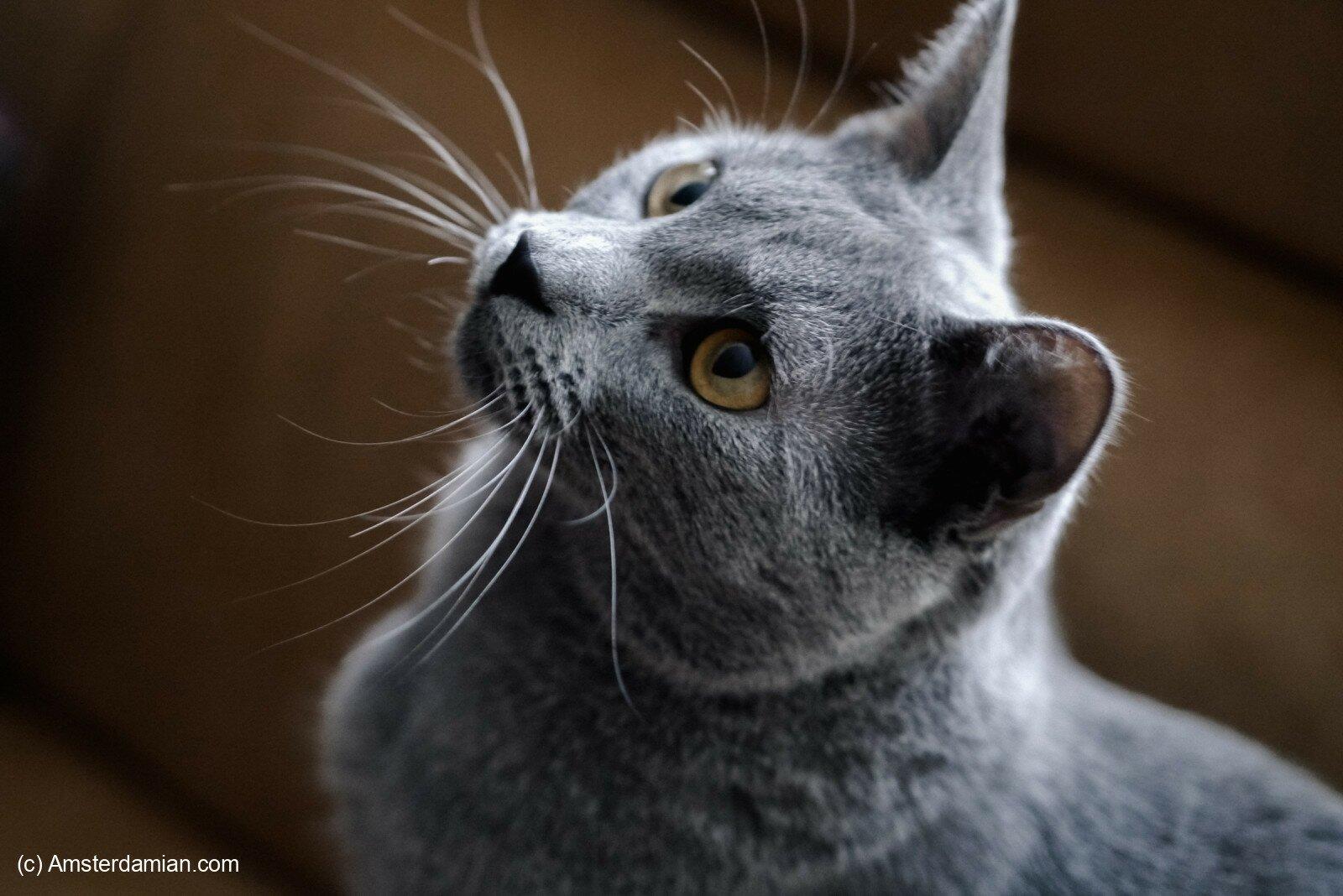 Pet photography 20