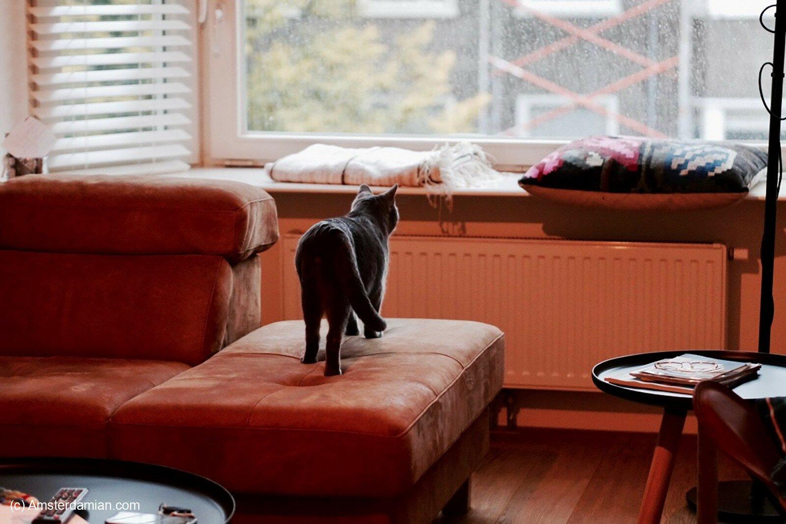 Pet photography 22