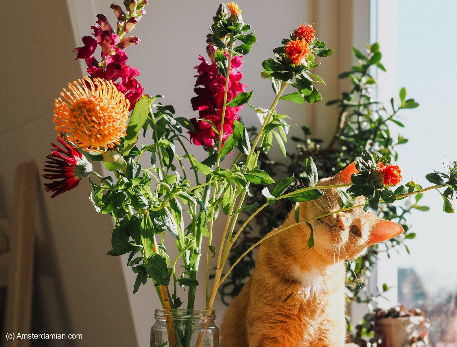 Pet photography 27