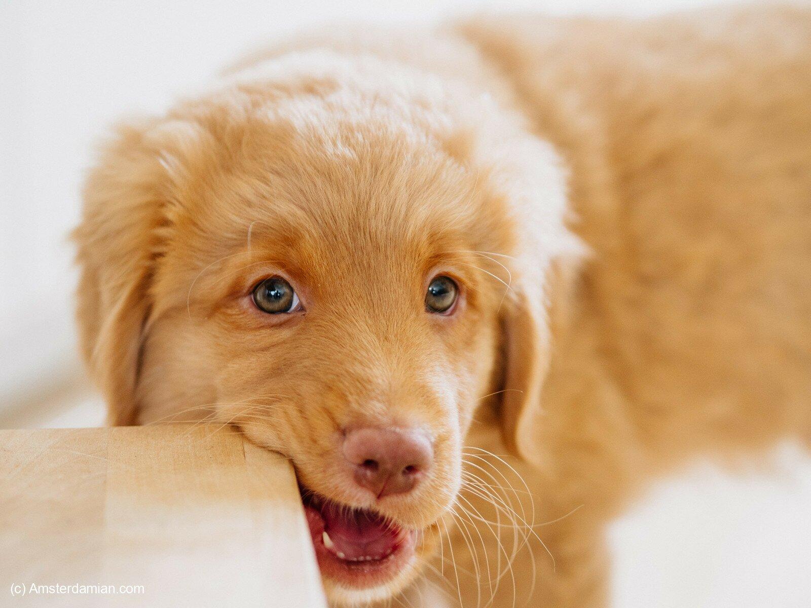 Pet photography 16
