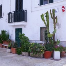 Cactuses on the streets of Monopoli