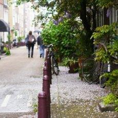 Beautiful rainy day 09