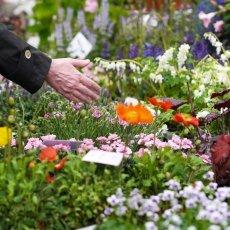 Flowers at Noordermarkt