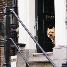 A curious dog