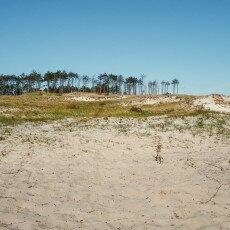 Schoorl Dunes 18