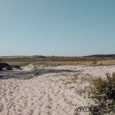 Schoorl Dunes 19