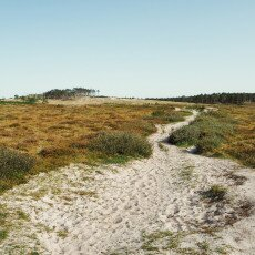 Schoorl Dunes 20