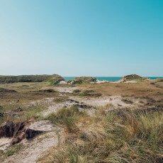 Schoorl Dunes 21