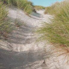 Schoorl Dunes 22