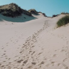 Schoorl Dunes 23