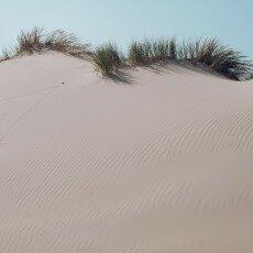 Schoorl Dunes 24
