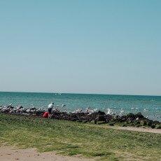 Schoorl Dunes 25