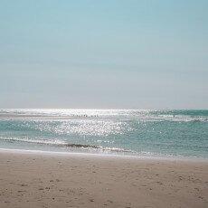 Schoorl Dunes 26