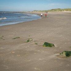 Schoorl Dunes 27